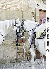 cavalos brancos