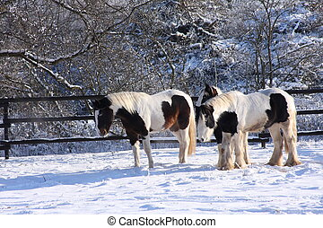 cavalos, cigana