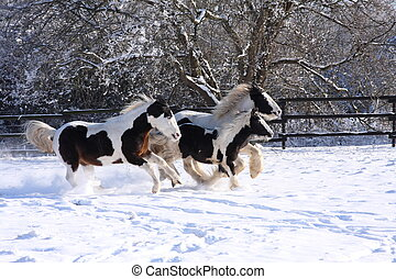 cavalos, cigana, executando
