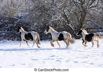 cavalos, cigana, inverno