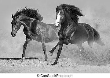 cavalos, corrida, em, deserto
