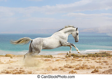 cavalos, corrida