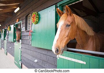 cavalos, em, a, estável