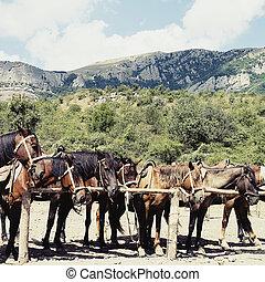 cavalos, em, estável