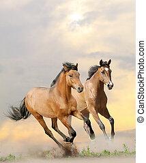 cavalos, em, pó