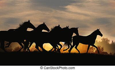 cavalos, em, pôr do sol