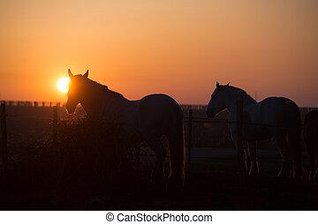 cavalos, em, pôr do sol, em, a, campo