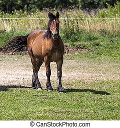cavalos, em, suwalki, paisagem, parque, poland.