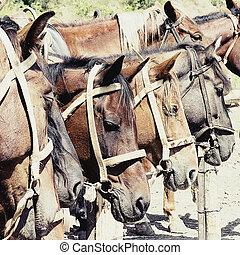 cavalos, estável