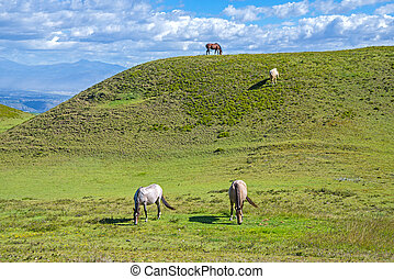 cavalos, grama campo, comer