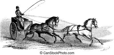 cavalos, gravura, 2-wheeled, vindima, carreta, 2, tandem,...