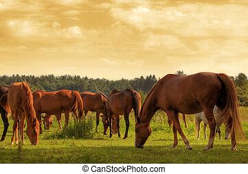 cavalos, ligado, a, campo