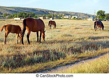 cavalos, ligado, prado