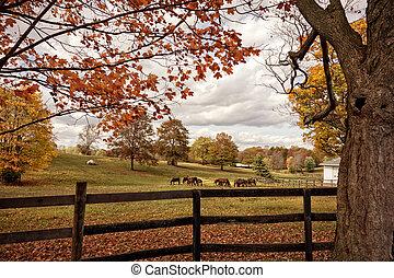 cavalos, Outono