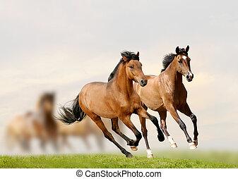 cavalos, pôr do sol