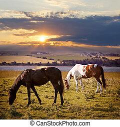cavalos, pôr do sol, pastar