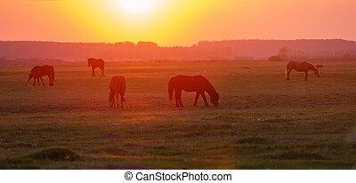 cavalos, pôr do sol, prado