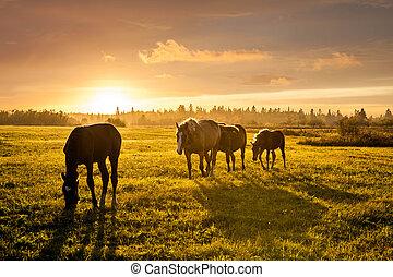 cavalos, pôr do sol, rural, pasto, pastar, paisagem
