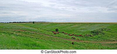 cavalos, paisagem., fauna, rebanho, steppe., animal