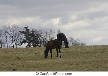 cavalos pastam, ligado, montanhoso, prado