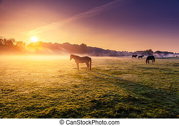 cavalos pastam, ligado, pasto