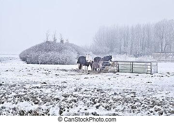 cavalos, pasto, gelado, inverno