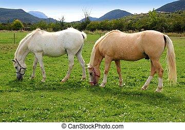 cavalos, prado, pyrenees, gramado pradaria, branca
