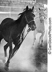 cavalos, rodeo, solto, executando