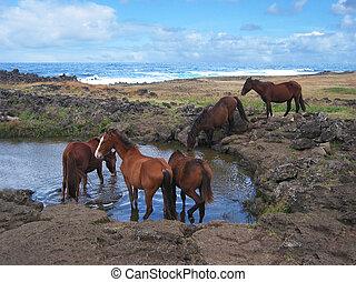 cavalos selvagens, em, estampando, ground., ilha páscoa