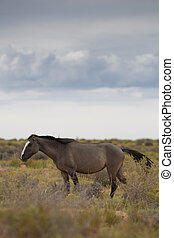 cavalos selvagens, utah
