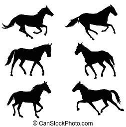 cavalos, silhuetas, cobrança