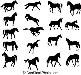 cavalos, vector-silhouettes, vário