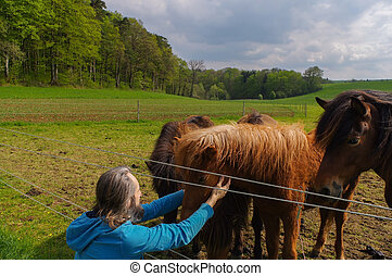 cavalos, verão, prado, tempo, whisperer, falando, homem