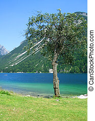 Cave del Predil lake and tree, vertical view