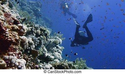 cave diving underwater scuba divers exploring cave dive. Red...