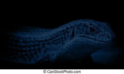 Cave Lizard At Night - Lizard resting in the dark