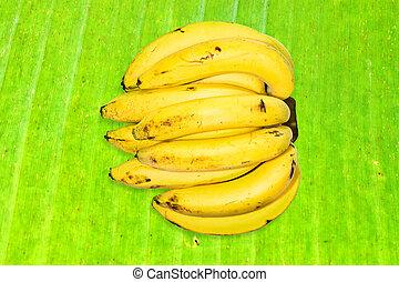 cavendish banana isolated on background