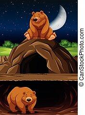 caverna, urso