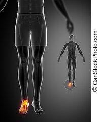 caviglia, x--ray, nero, scansione osso