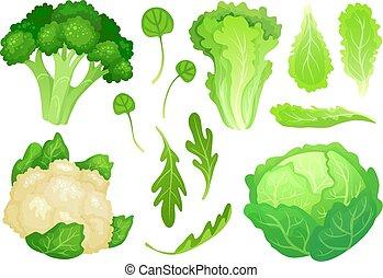 cavolfiore, testa, insalata giardino, lattuga, sano, vegetariano, cabbages., dieta, foglie, cabbage., vettore, verde, illustrazione, fresco, cartone animato