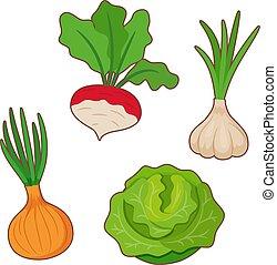 cavolo, cipolla, aglio, ravanello