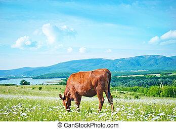 caws, en, campo