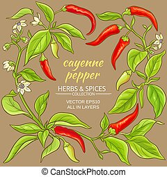 cayenne pepper frame - cayenne pepper vector frame on color ...