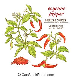 cayenne pepper set - cayenne pepper vector set on color ...