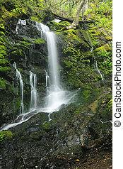 caynon, lussureggiante, cascata, california, foresta...