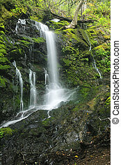 caynon, luxuriant, chute eau, californie, rainforest, ...