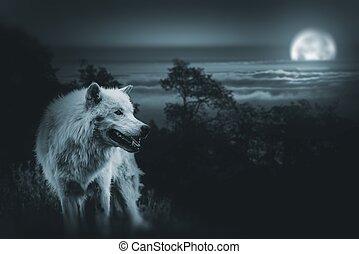 caza, lobo, luna llena