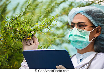 cbd, γιατρός , εναλλακτικός , medicine., analizing, κάνναβις...