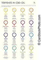 cbd, オイル, infographic, 縦, ビジネス, フォーミュラ, 構造, terpenes