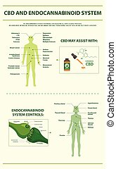 CBD and Endocannabinoid System vertical infographic